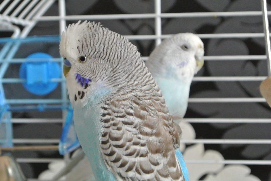 The Benefit of Pet Bird Toys