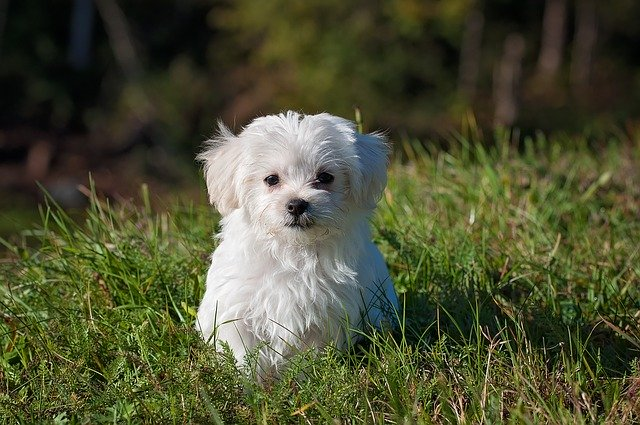 Dog Trainers- Make You Connect With Your Pet
