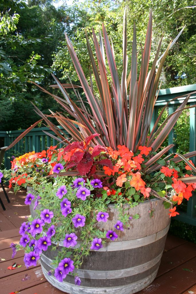 Container Gardening: Growing Success in Your Own Backyard