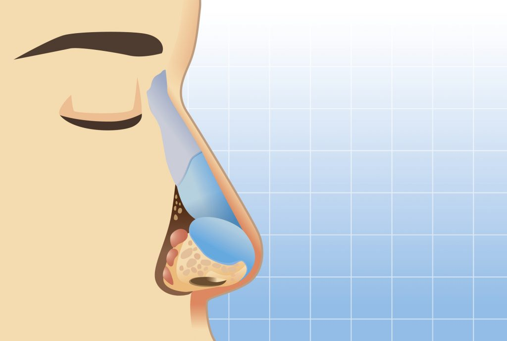 The Nose: Our Organ for Breathing